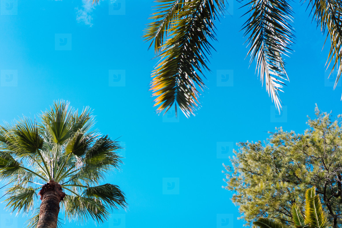 photo foliage of tropical palm trees