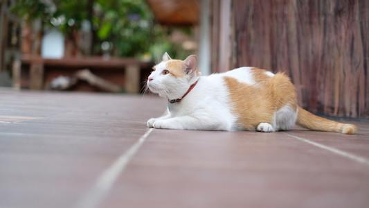 Cat 170599