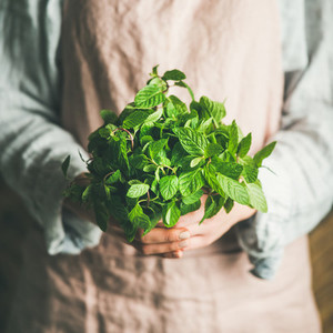 Female farmer holding bunch of fresh green mint square crop