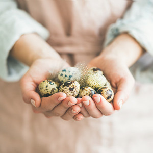 Natural colored quail eggs and feather in womans hands