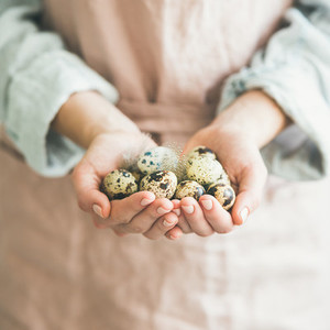 Quail eggs and feather in womans hands for Easter