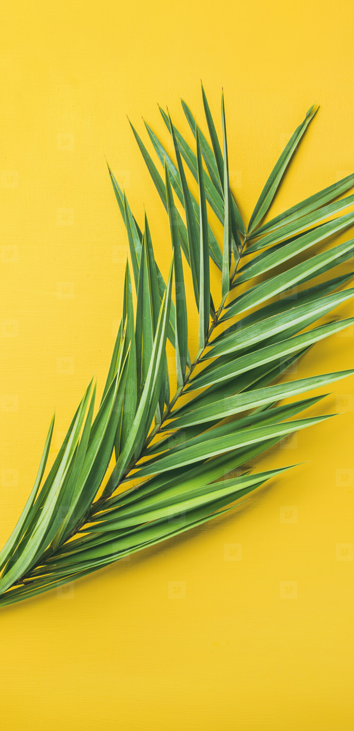 Green palm branches over yellow background  top view  narrow composition