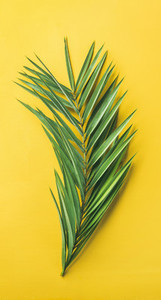 Green palm branch over bright yellow background  narrow composition