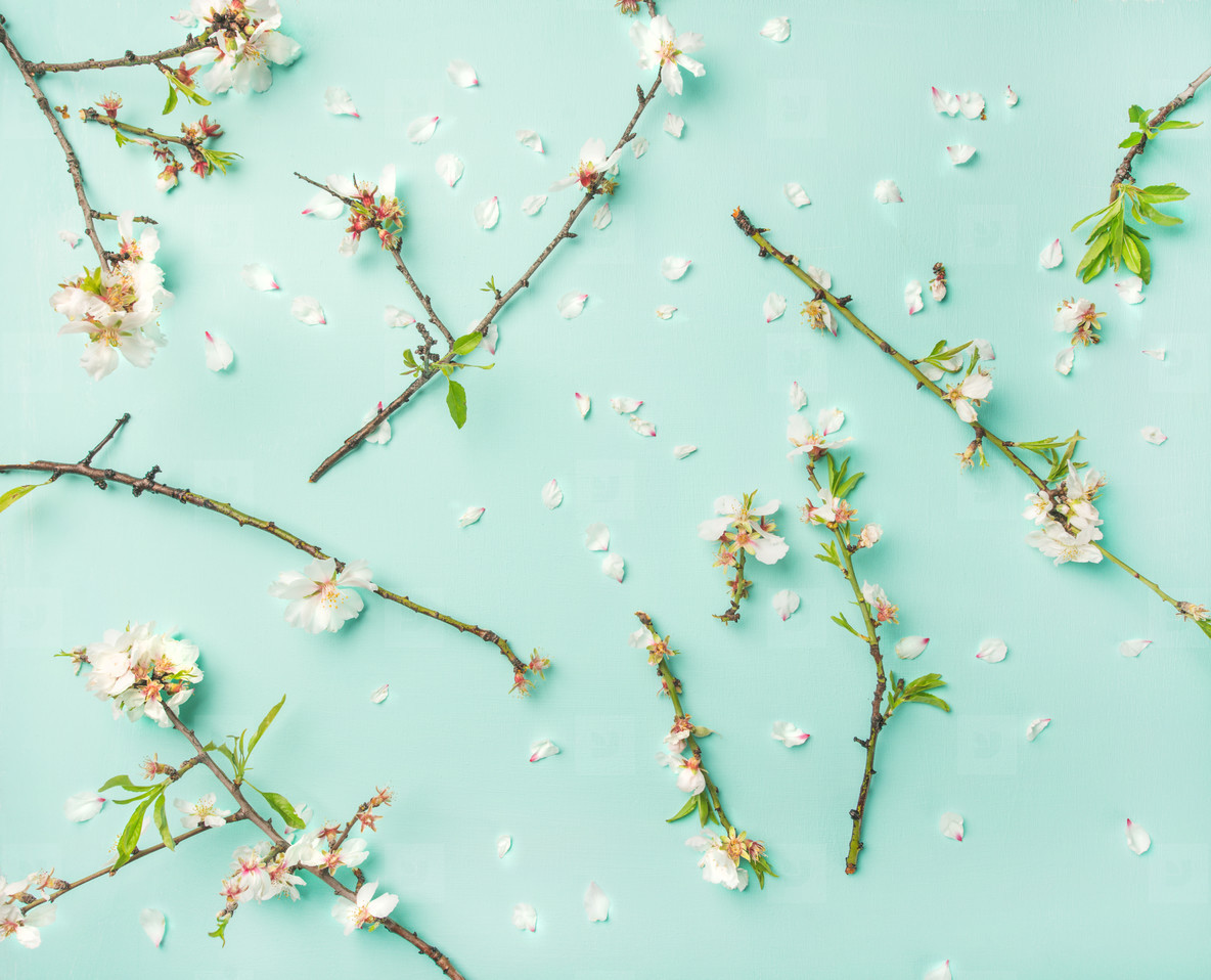 Photos Spring Floral Background With Almond Blossom Flowers Over