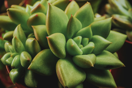 Amazing close up of an exotic succulent plant