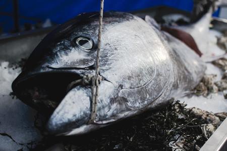 Large tuna fish at a fish market