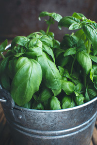 Little bucket of basil