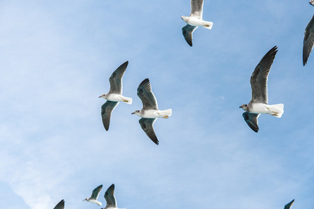 sea gulls in bluu sky