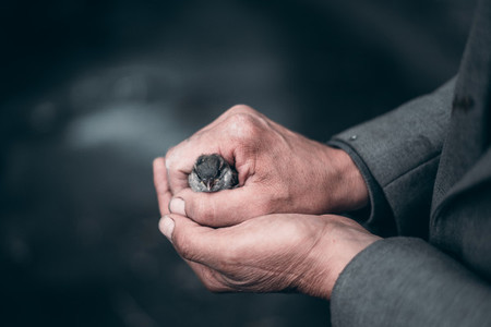 small bird in the hands of worker Old hands Protection bird