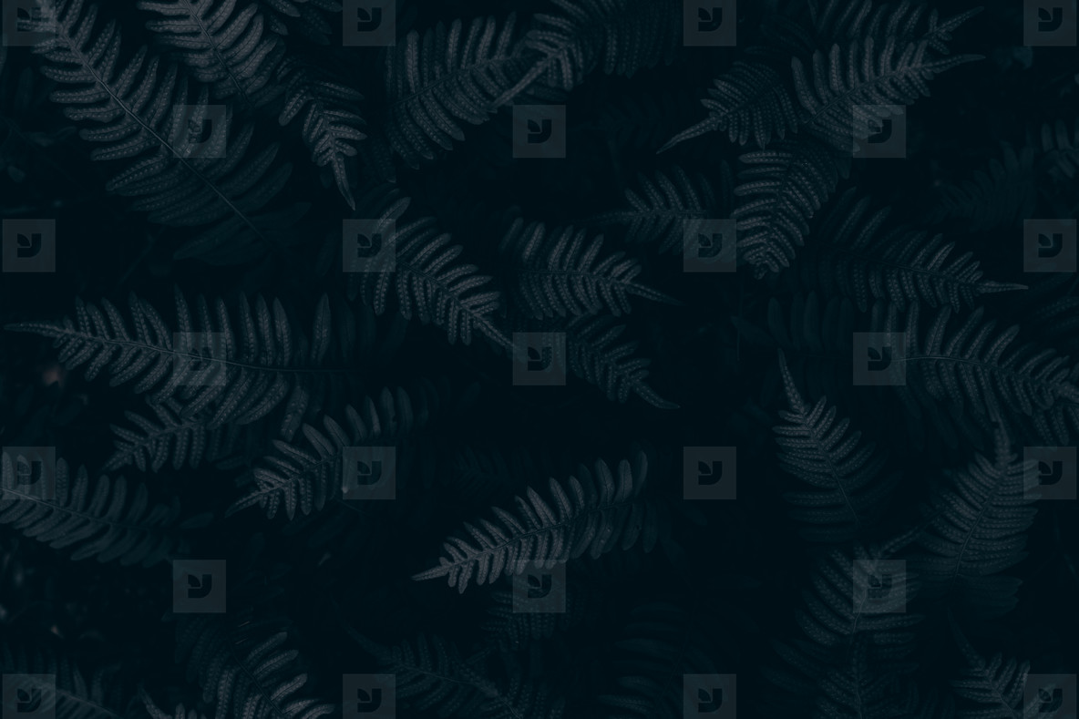 Green leave background  Vintage tone  Darkness Concept
