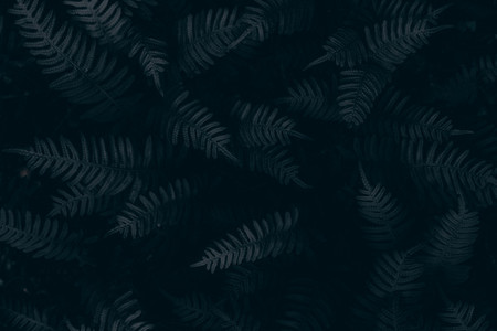 Green leave background  Vintage tone  Darkness Concept