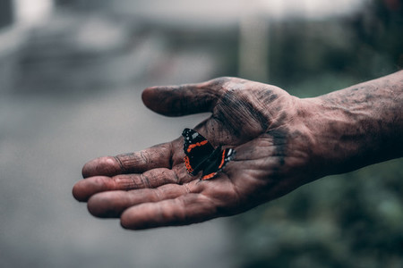 Dirty mans hand holds butterfly
