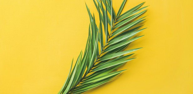 Green palm branches over yellow background  top view  wide composition