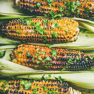 Flat lay of grilled sweet corn with spices and herb close up