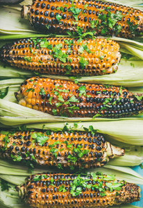 Flat lay of grilled sweet corn with spices over blue background