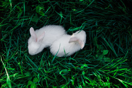 Two small rabbits against a background of juicy green grass  top view