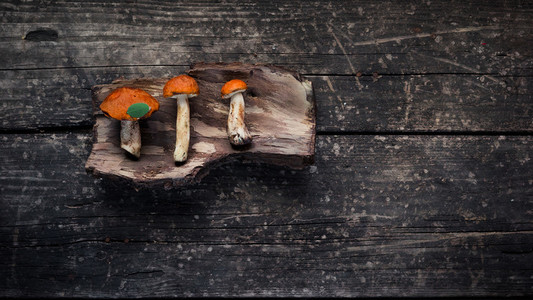 Brown mushrooms on the bark of a tree wooden background