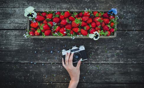 Old retro camera and strawberry with flowers in a box on a wooden old board background