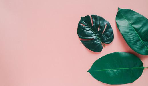 Creative flat lay of green botany plant