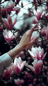 Womans hand touching blossom