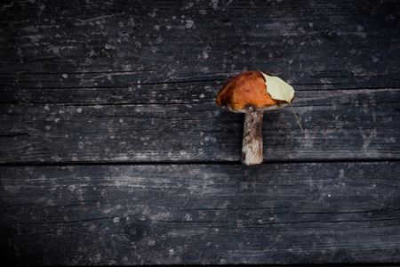 brown mushroom with yellow leaf  on a wooden background