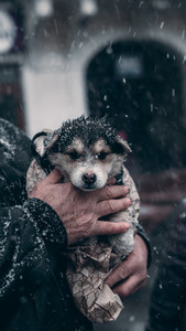 Grandpa saves the dog in winter