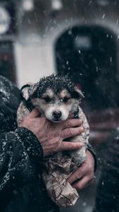 Grandpa saves the dog in winter