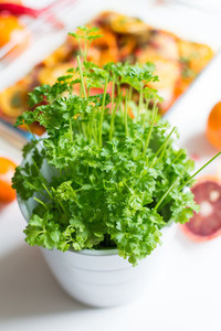 Pot of green fresh parsley