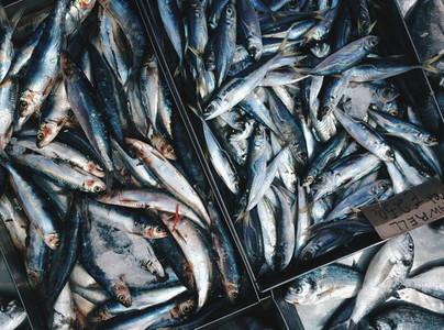Raw mackerells on ice for sale