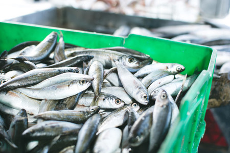 Sardines for sale in container