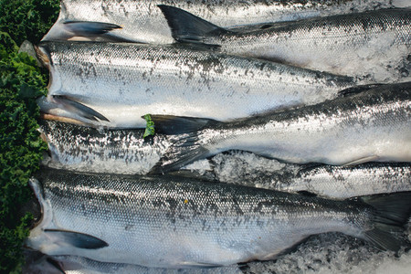 Silver fish for sale at fish mar