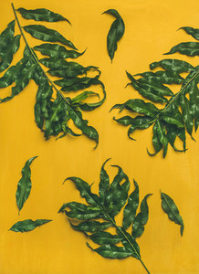 Tropical tree green leaves over bright yellow background  vertical composition