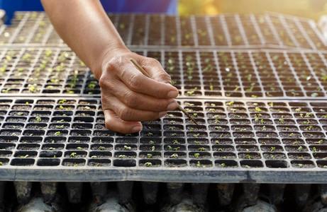 Hand seedlings baby plant