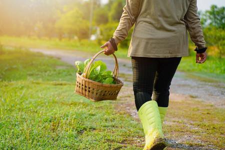 Farmer picking organic vegetable