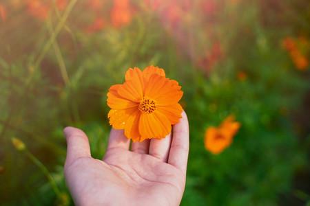 Hand holding orange flower