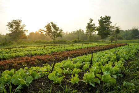 Landscape of organic vegetables