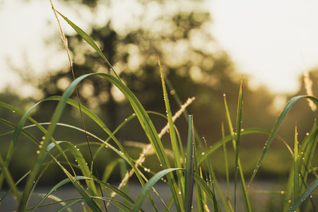 Beautiful green grass in the morning