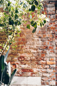 Old brick wall background with plant  Vertical orientation