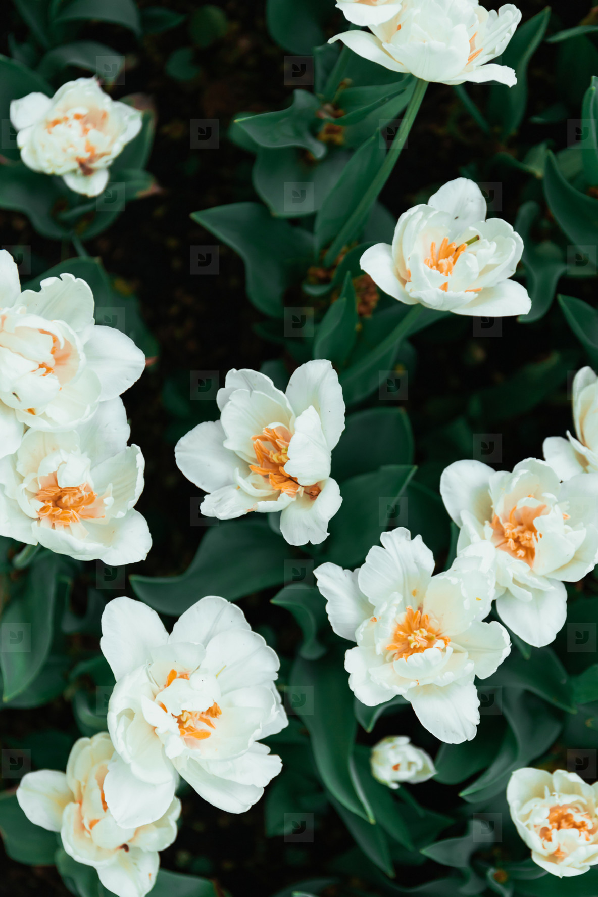 Photos - Beautiful white flowers on a summer m 173531 - YouWorkForThem