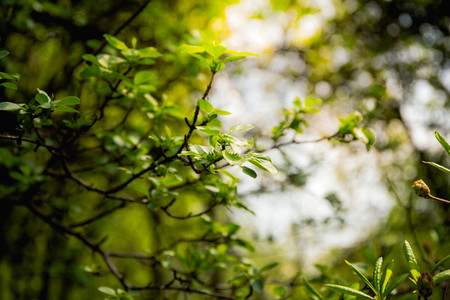 Beautiful Nature background  Growing foliage of a tree in sun rays in a forest