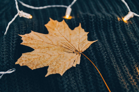 Dried maple leaf on a warm sweater surrounded festoon lights Cozy fall or winter still life