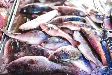 Small fish at fish market