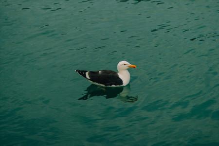 Seagull and sea