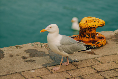 Seagulls and yellow