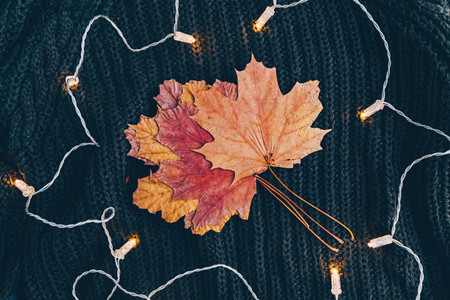 Dried maple leaf on a warm sweater surrounded festoon lights  Cozy fall or winter flat lay  top view