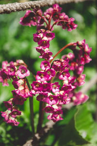 Beautiful pink bell flowers on a village meadow Macro photography