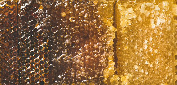 Bee honeycomb texture  wallpaper and background  top view