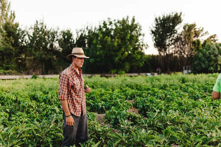Young farmer man with hat working in his field