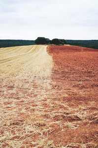 Agriculture field in Burgos after harvest