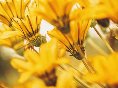 Extreme close up orange flowers 01